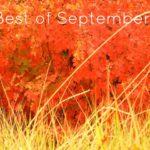 Bella's Best of September