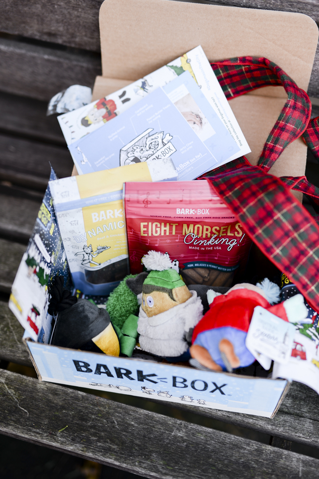 Great Last Minute Gifts For Dogs by Boston lifestyle blogger Elisabeth McKnight